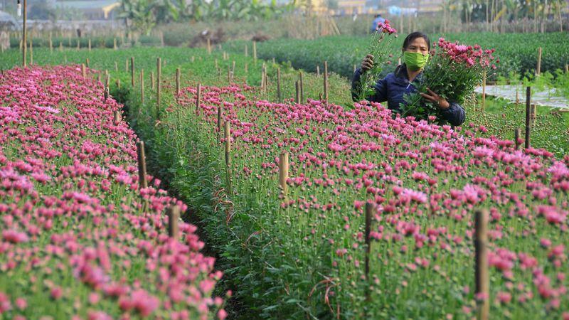 Tour du lịch Hà Nội 1 ngày Nghi Tàm Sông Hồng Cầu Long Biên 2