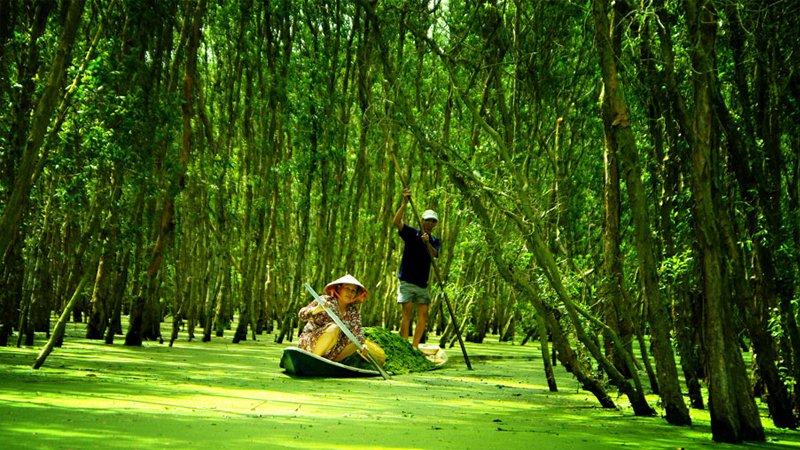 Tour Du Lịch 4N3Đ Cà Mau U Minh Vườn Cò Trà Sư 4