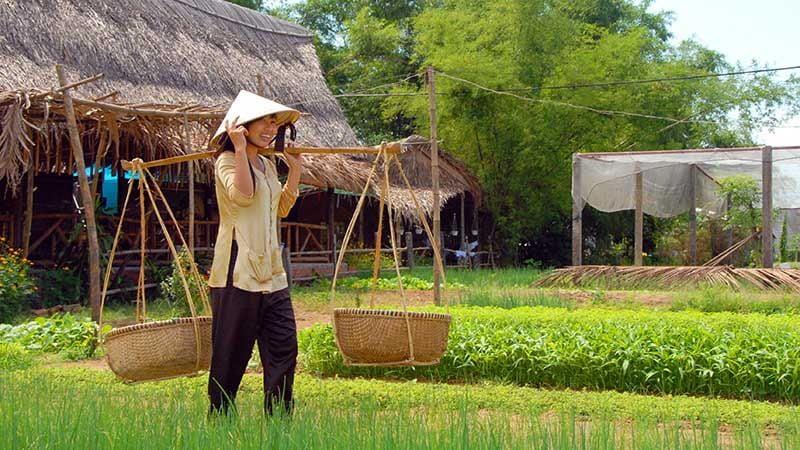 Tour du lịch miền Trung 1 ngày: Làng rau trà quế Hội An 1