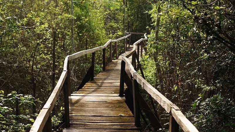 Tour du lịch rừng Nam Cát Tiên 2 ngày: Một trải nghiệm thú vị 1