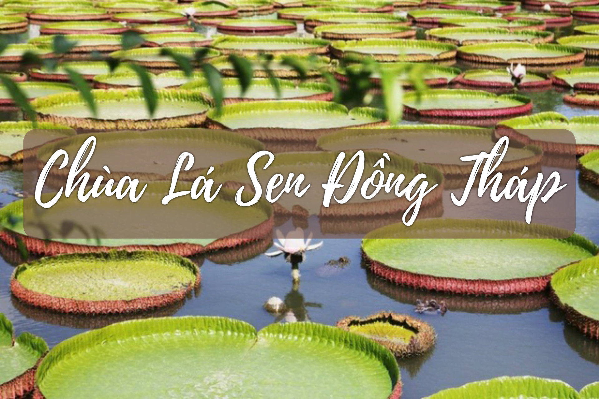 Tour du lịch miền tây 4N3Đ: Đồng Tháp - Châu Đốc - Cà Mau - Bạc Liêu - Sóc Trăng 1